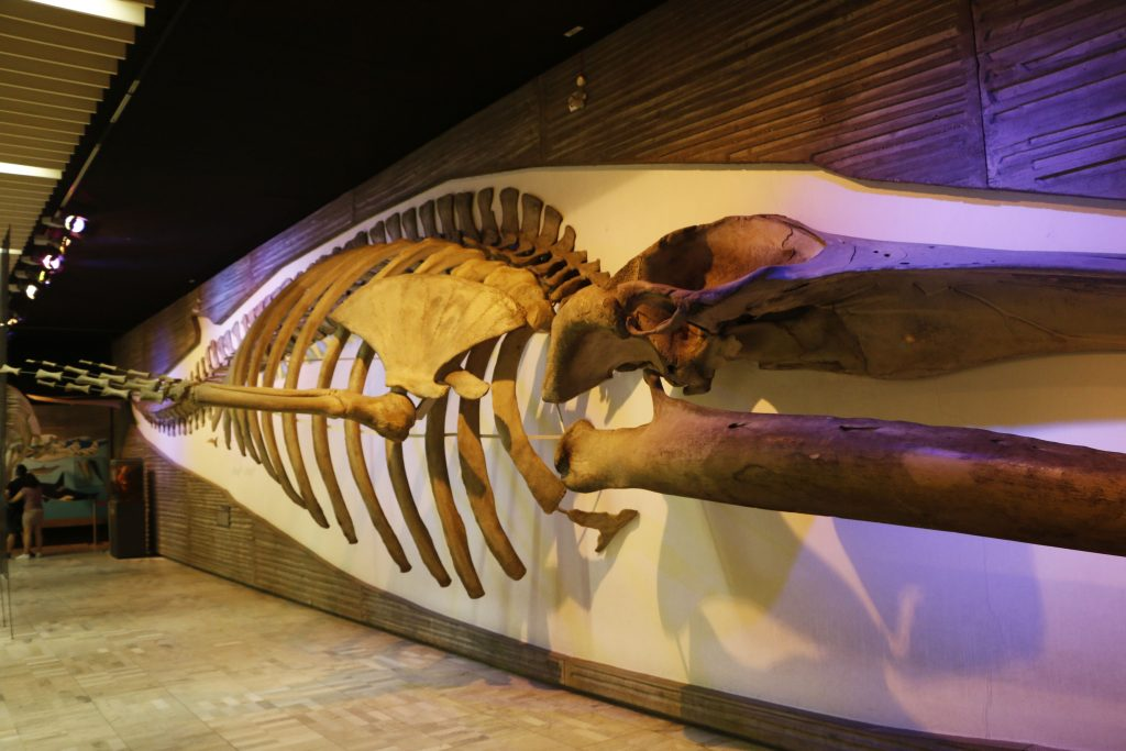 The skeletons of dinosaurs and whales are clearly the most impressive!